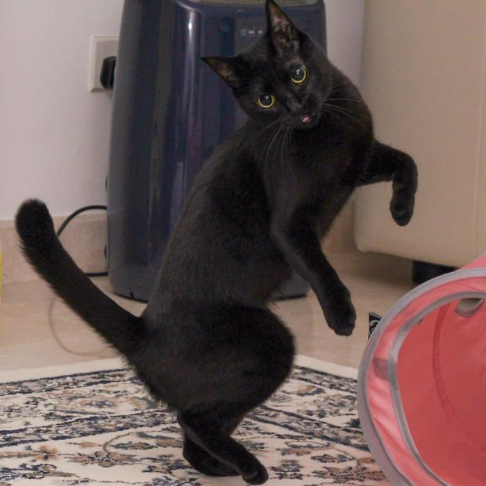 رقص القطط (4)
