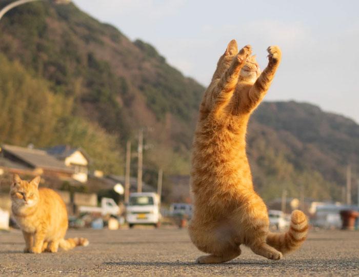 رقص القطط (22)
