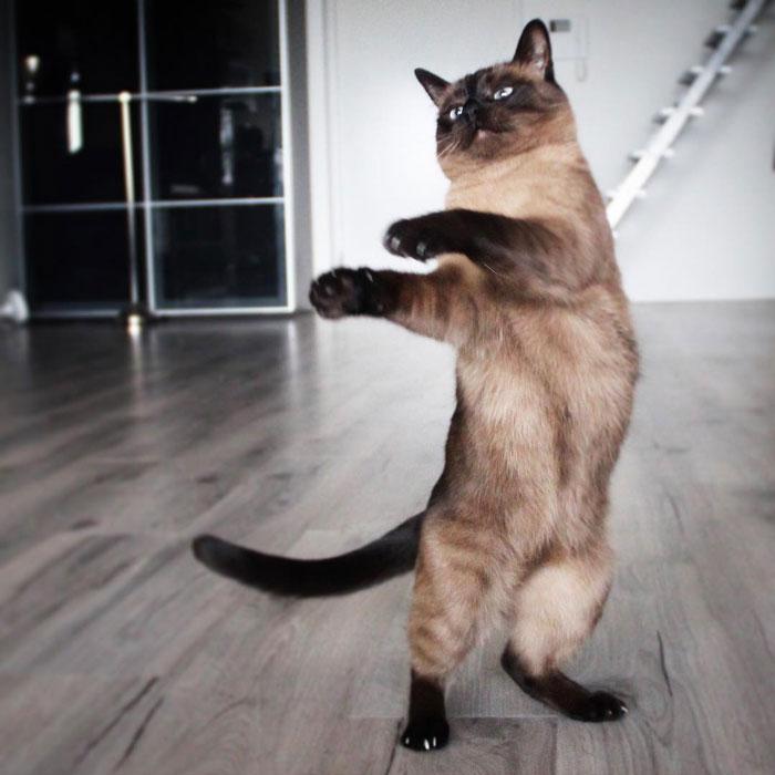رقص القطط (34)