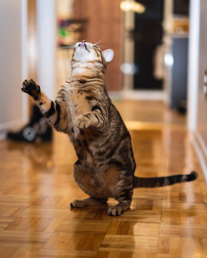 رقص القطط (17)