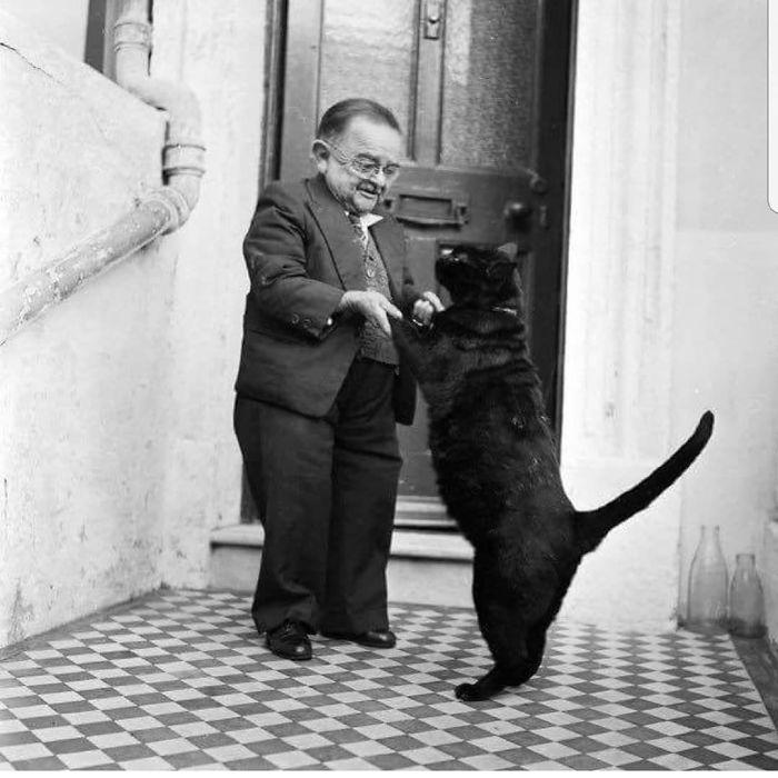رقص القطط (2)