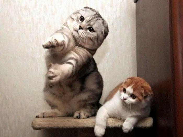 رقص القطط (14)