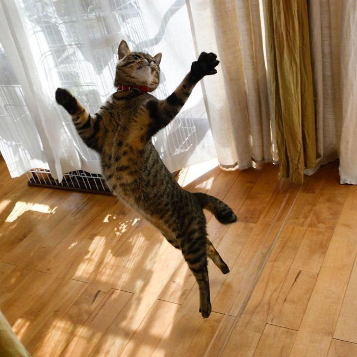 رقص القطط (9)