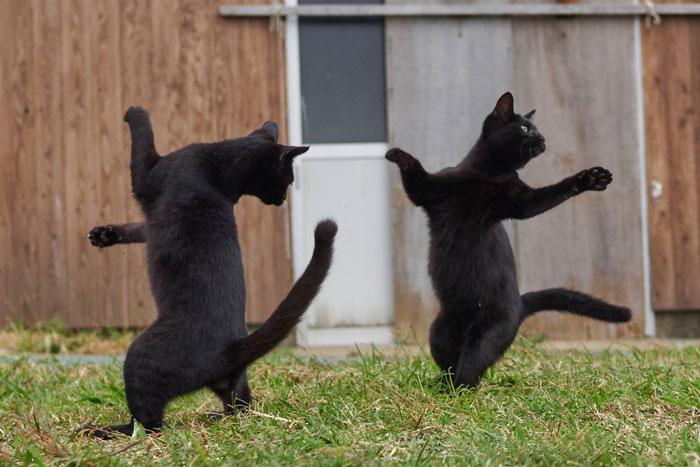 رقص القطط (31)