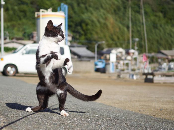 رقص القطط (27)