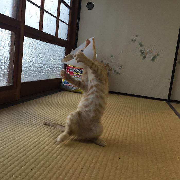 رقص القطط (35)