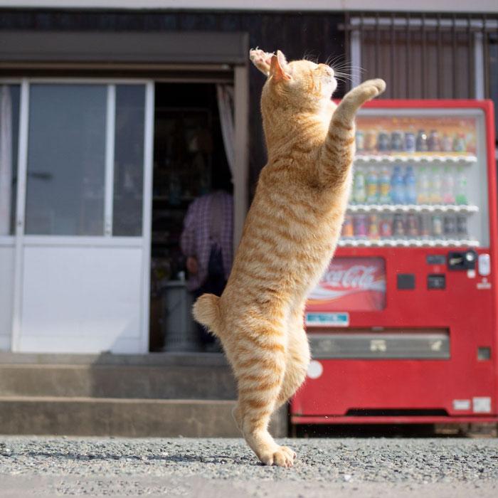 رقص القطط (23)