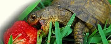 امراض تنقلها السلاحف