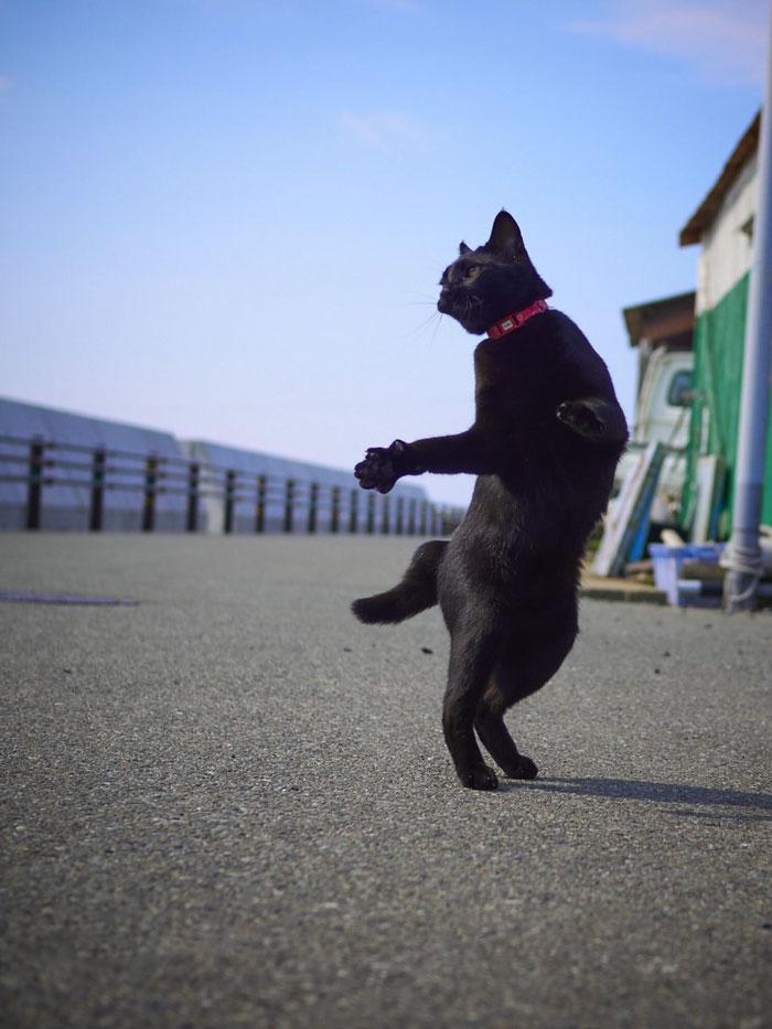 رقص القطط (26)