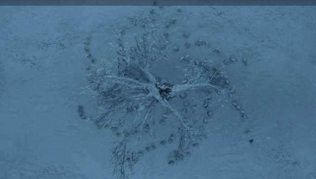الصورة بعد تجميد الوايت ووكر للشجرة