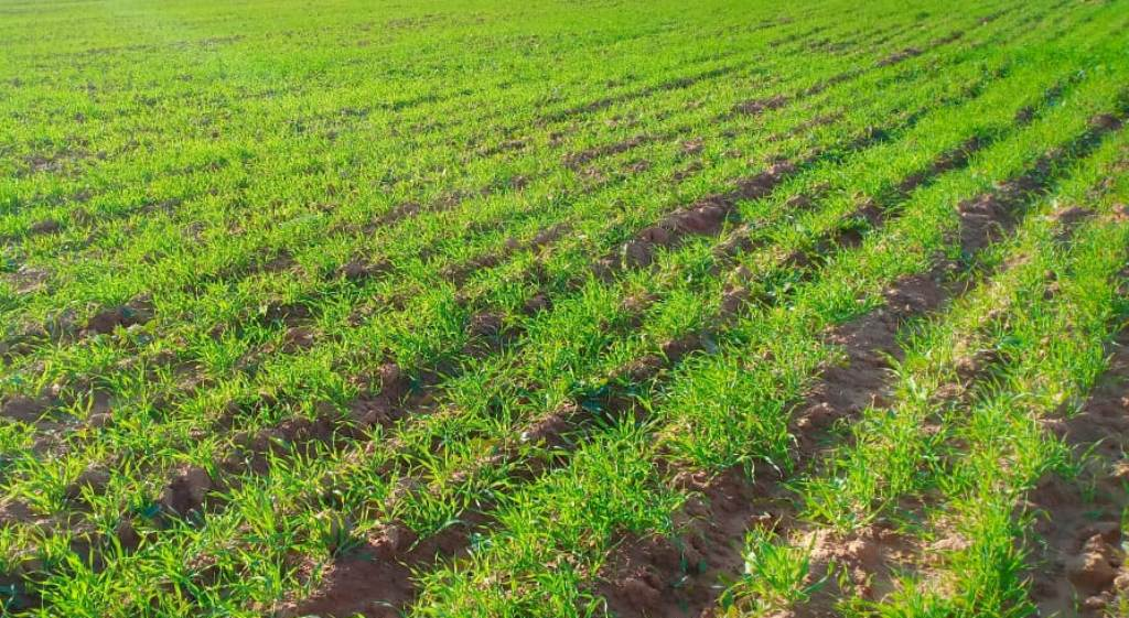 زيادة المساحات الخضراء نتيجة تزايد سقوط الامطار (2)