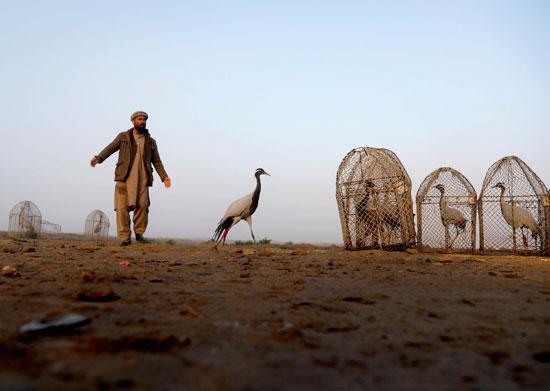 حياة صائد الطيور الأفغانى فى حقل باجرام  (9)