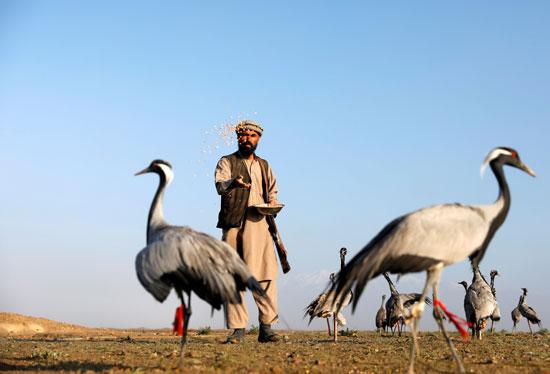 حياة صائد الطيور الأفغانى فى حقل باجرام  (1)