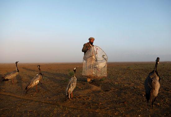 حياة صائد الطيور الأفغانى فى حقل باجرام  (6)