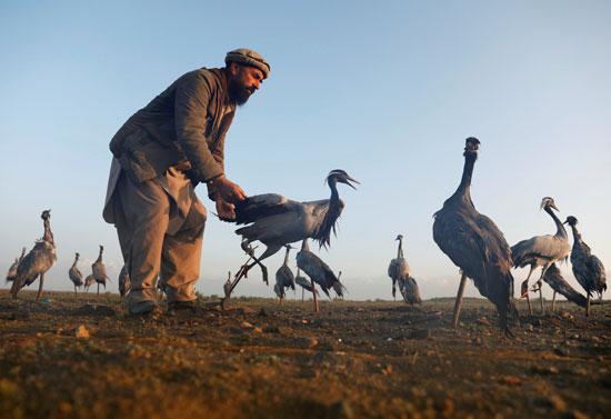 حياة صائد الطيور الأفغانى فى حقل باجرام  (7)