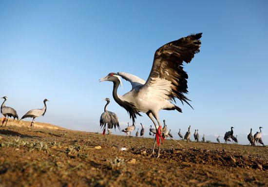حياة صائد الطيور الأفغانى فى حقل باجرام  (4)