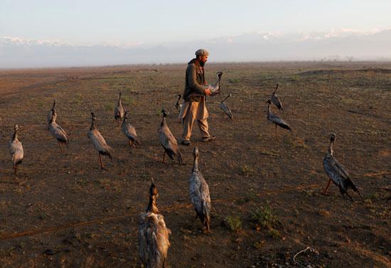 حياة صائد الطيور الأفغانى فى حقل باجرام  (3)