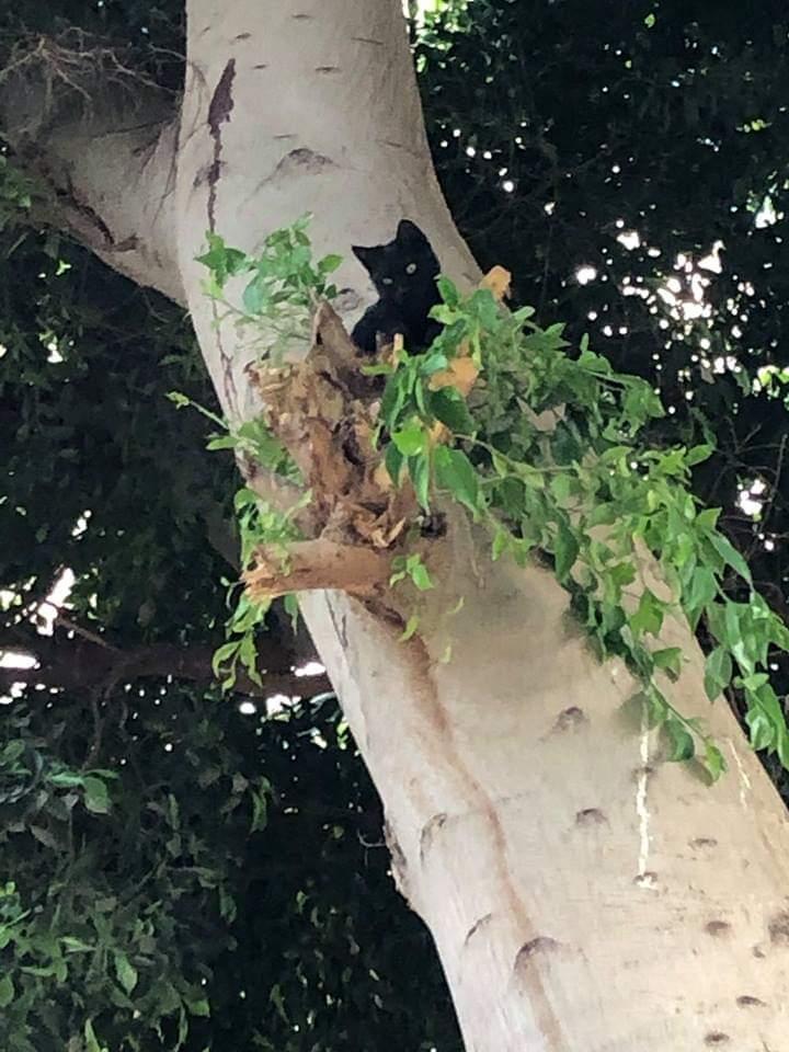 القطة عالقة على الشجرة