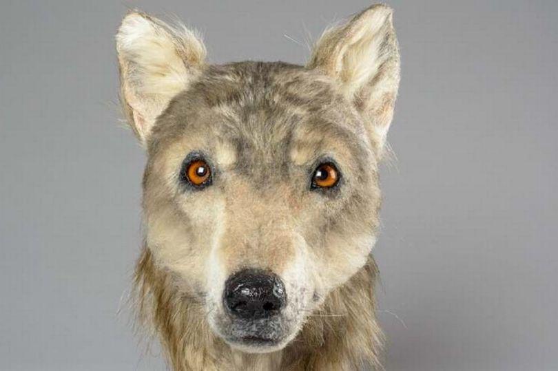 وجه كلب 2