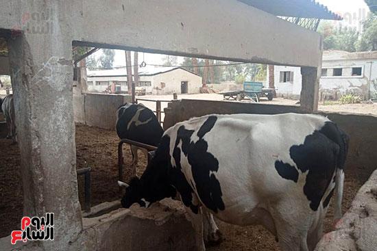 مزارع الثروة الحيوانية بأسيوط (4)