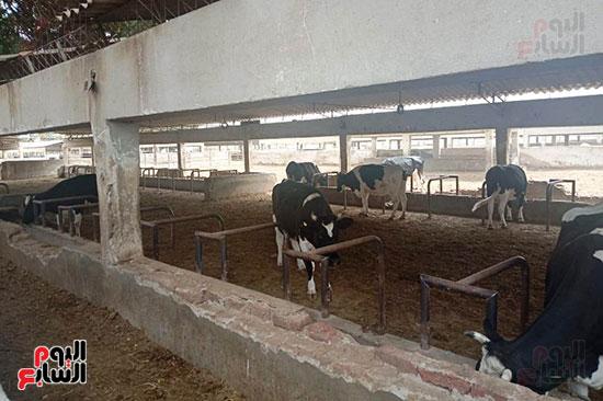 مزارع الثروة الحيوانية بأسيوط (3)