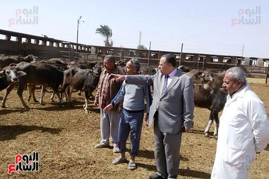 مزارع الثروة الحيوانية بأسيوط (21)