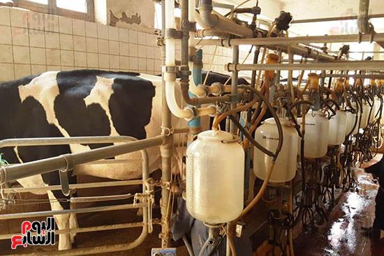 مزارع الثروة الحيوانية بأسيوط (10)