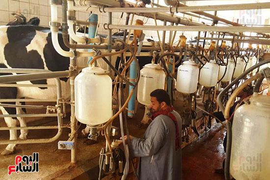 مزارع الثروة الحيوانية بأسيوط (9)