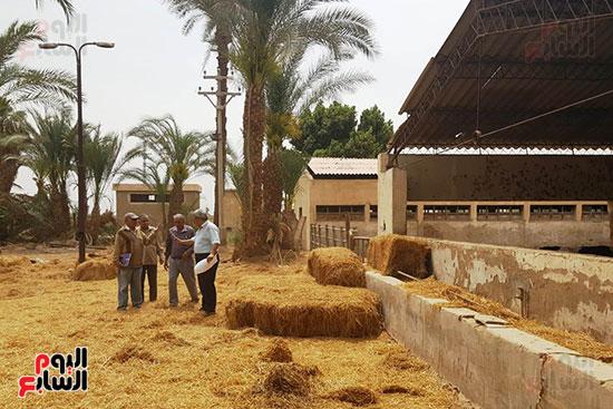مزارع الثروة الحيوانية بأسيوط (13)