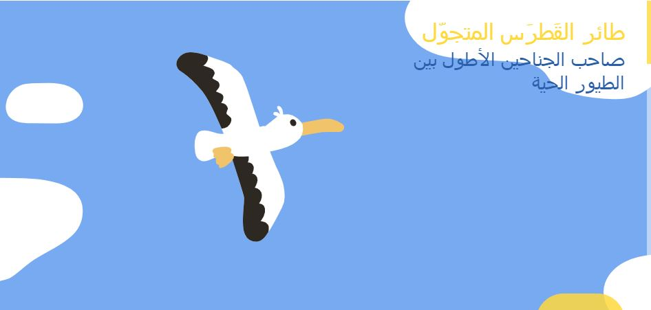 طائر القطرس