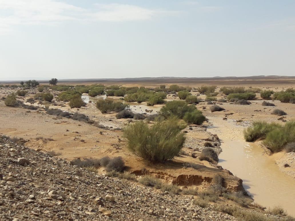 وسط سيناء بتتعمر (10)