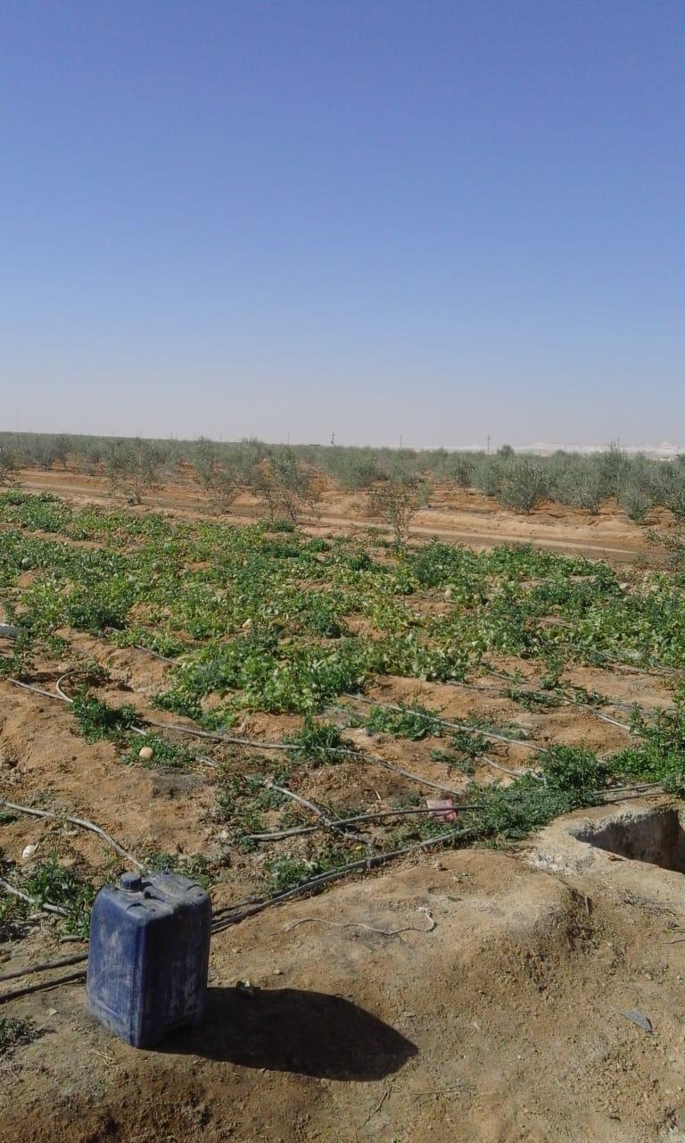 وسط سيناء بتتعمر (6)