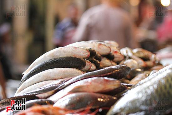 سوق السمك  (9)