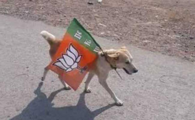 الكلب المعتقل