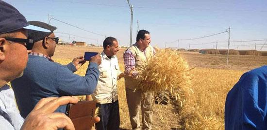 حصاد أول زراعة لمحصول القمح والشعير (10)