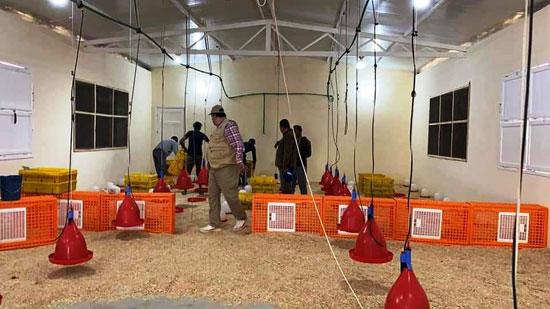 حصاد أول زراعة لمحصول القمح والشعير (9)