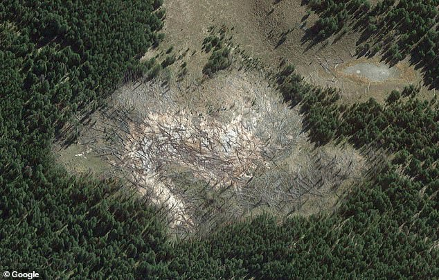 المنطقة القاتلة للاشجار