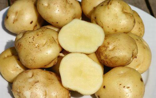 بطاطس لابونت
