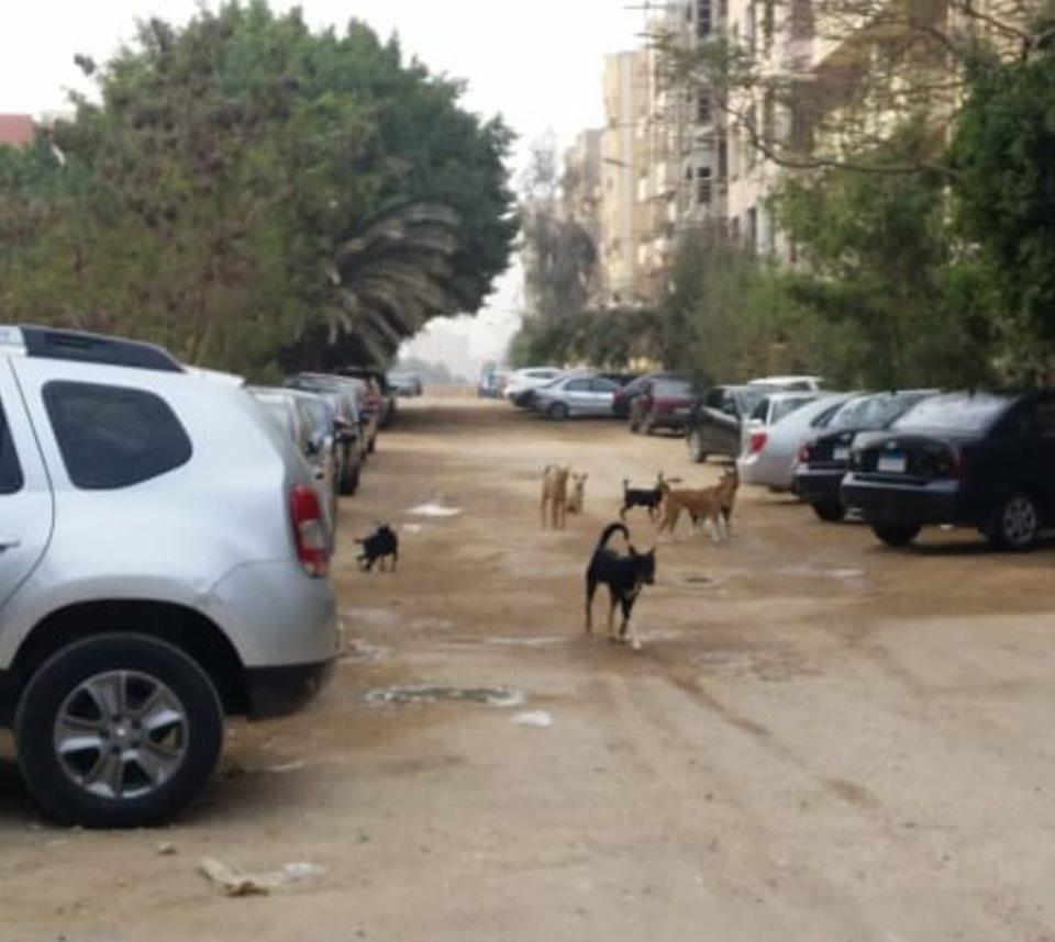 كلاب الضالة