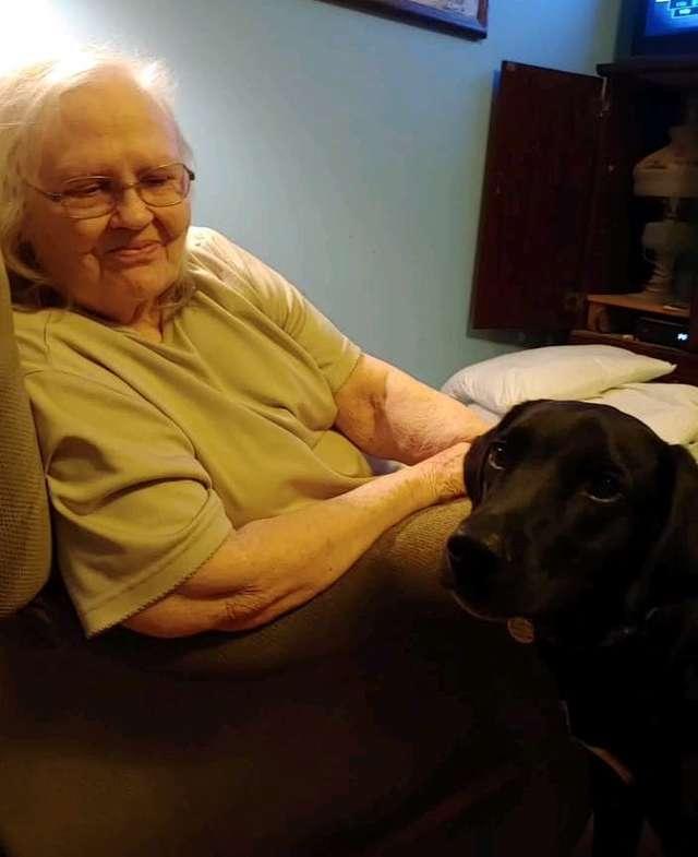 الكلب والجدة