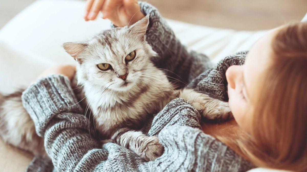 صفات يتركها الكلاب والقطط في أصحابهم (3)