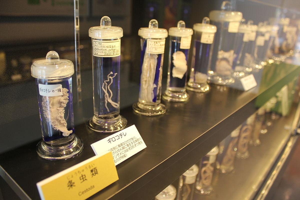 Laika_ac_Meguro_Parasitological_Museum_(7482791412)