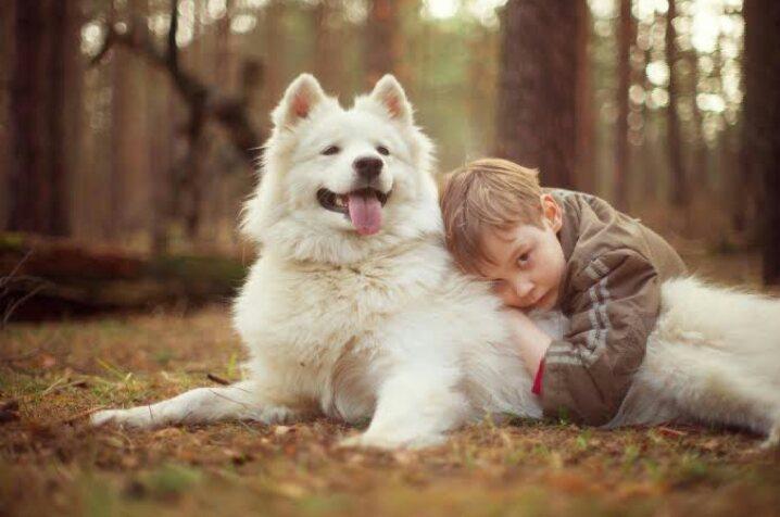 صفات يتركها الكلاب والقطط في أصحابهم (2)