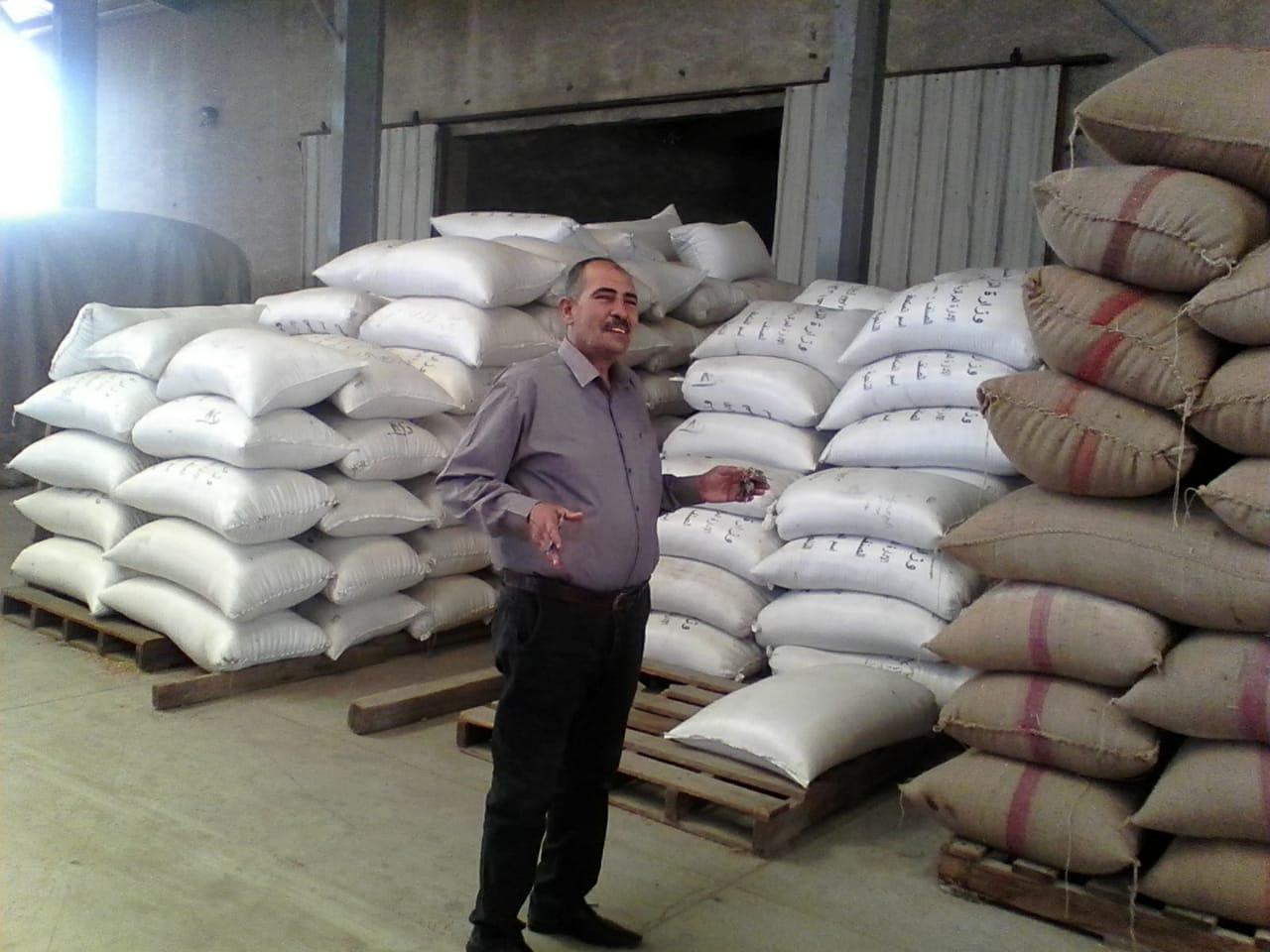 بدء استلام تقاوى القمح والشعير والفول استعدادا للموسم الجديد (5)
