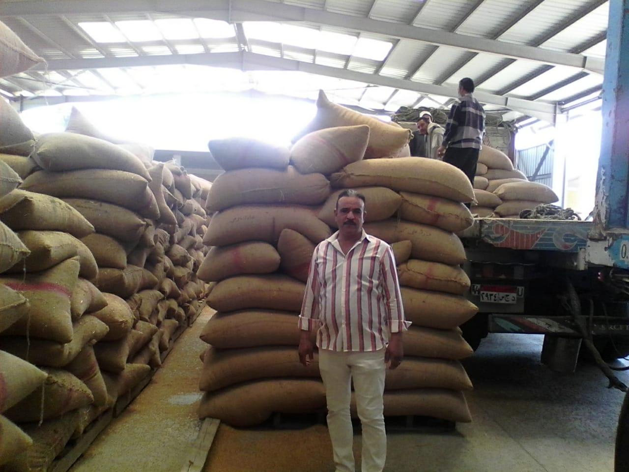 بدء استلام تقاوى القمح والشعير والفول استعدادا للموسم الجديد (1)