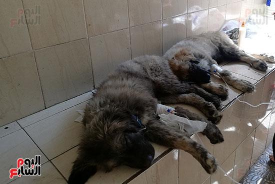 مراكز رعاية الحيوانات الأليفة (7)