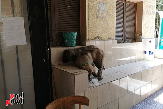 مراكز رعاية الحيوانات الأليفة (1)
