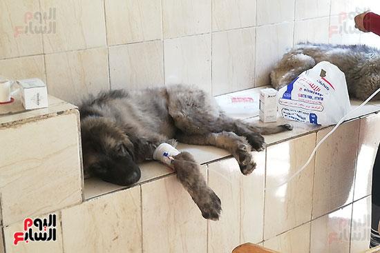 مراكز رعاية الحيوانات الأليفة (5)