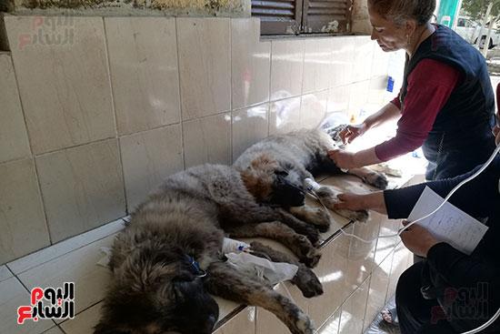 مراكز رعاية الحيوانات الأليفة (8)