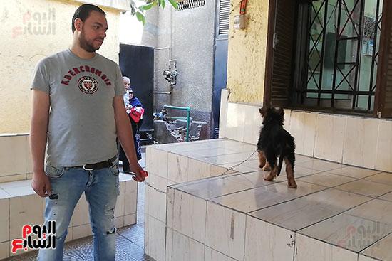 مراكز رعاية الحيوانات الأليفة (2)